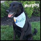 Murphy-frame-name.jpg